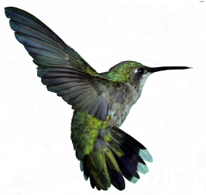 What is the hummingbird update